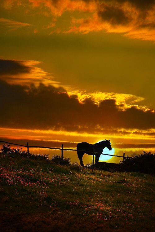 sunset horse beauty
