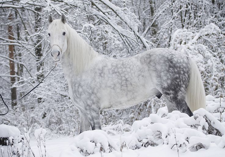 unique horse name winter horse forest