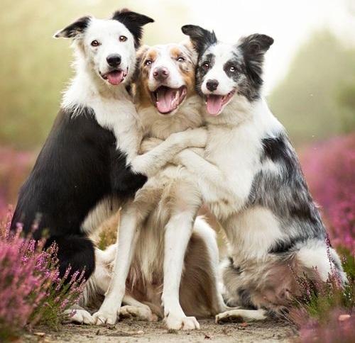 Puppies Cat Dog Friend