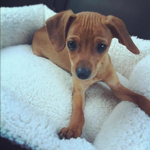 The Cutest Dog Ever For Sale