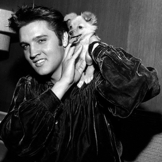 Elvis Presley pomeranian