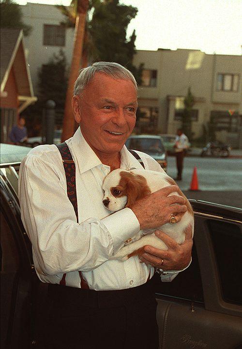 Frank Sinatra spaniel