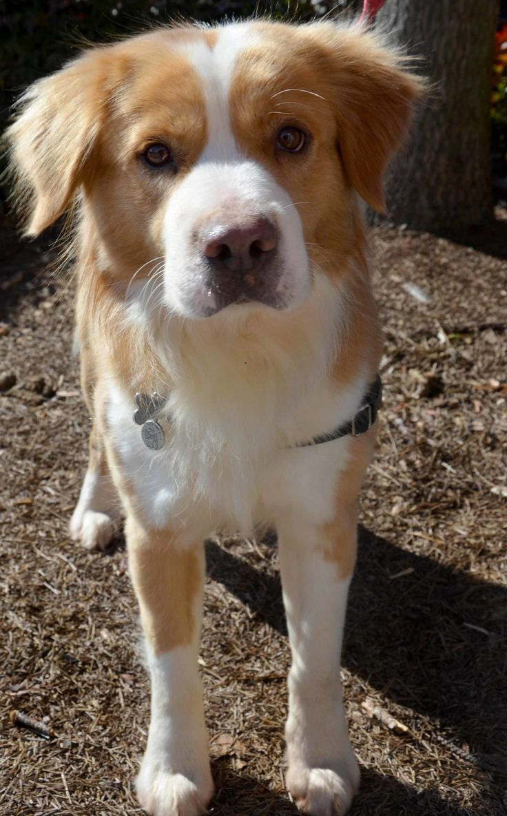 Mixed Breed Dogs For Sale Bc