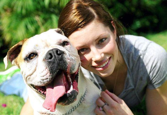 Jessica Biel bulldog