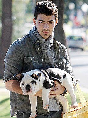 Joe Jonas bulldog