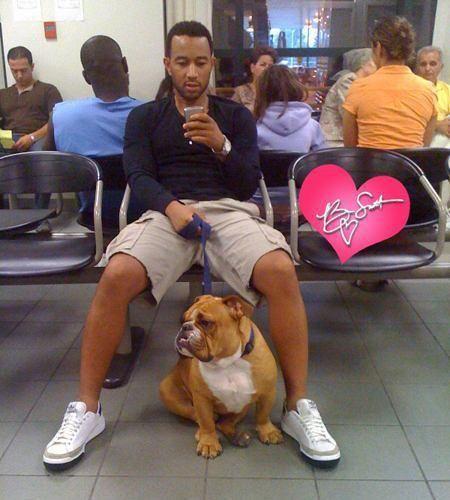 John Legend bulldog