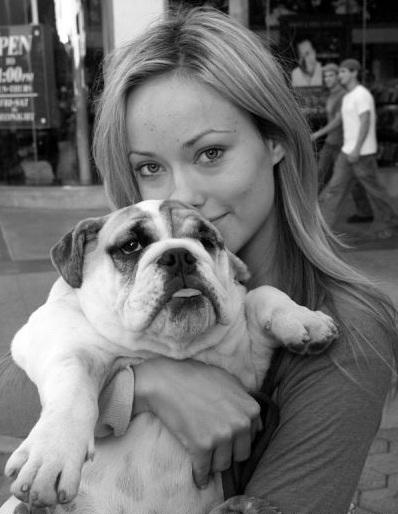 Olivia Wilde bulldog