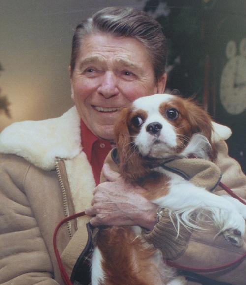 Ronald Reagan spaniel