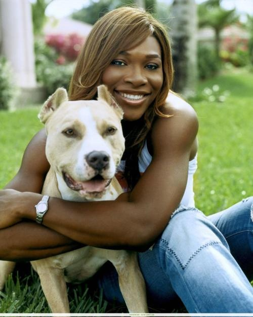 Serena Williams pit bull