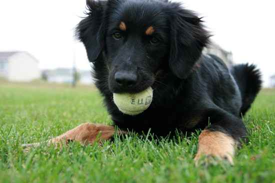 16 Unreal German Shepherd Cross Breeds You Have To See To