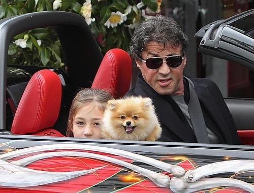 Sylvester Stallone pomeranian