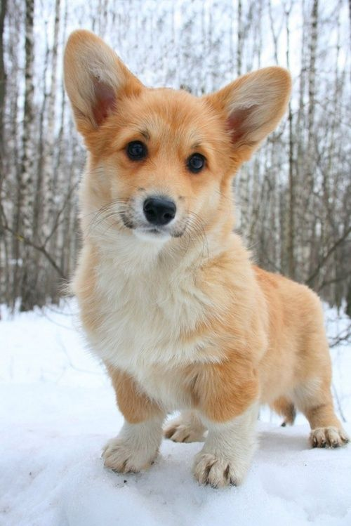 Can Dog Live Outside In Winter