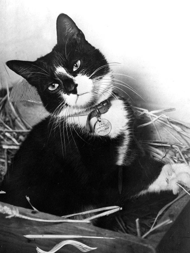 cute cat black and white