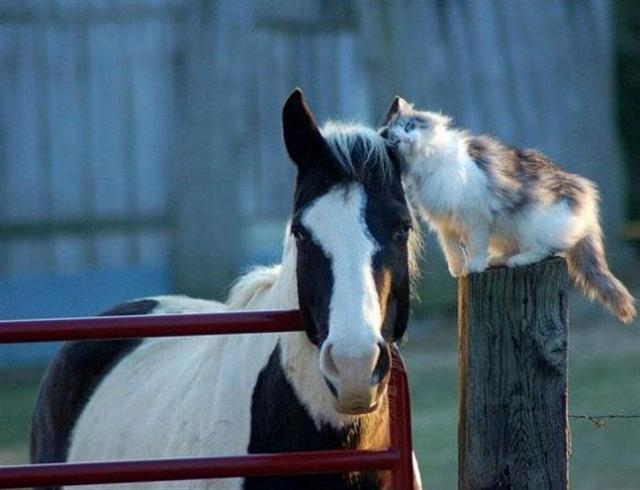 cute cat horse friends