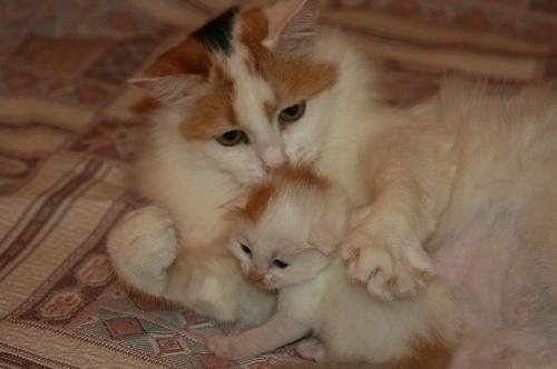 kitten worm medicine