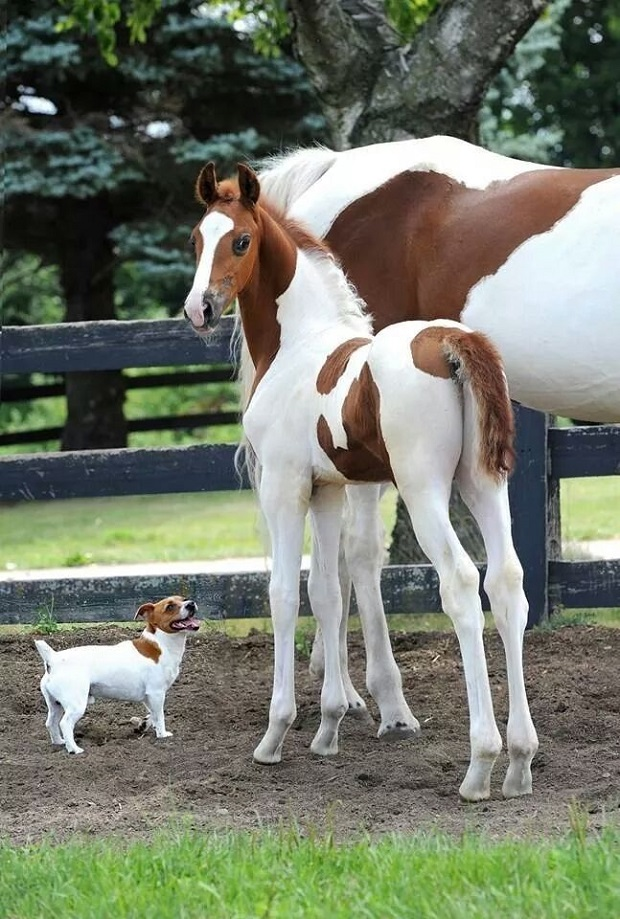 cute dog color baby horse