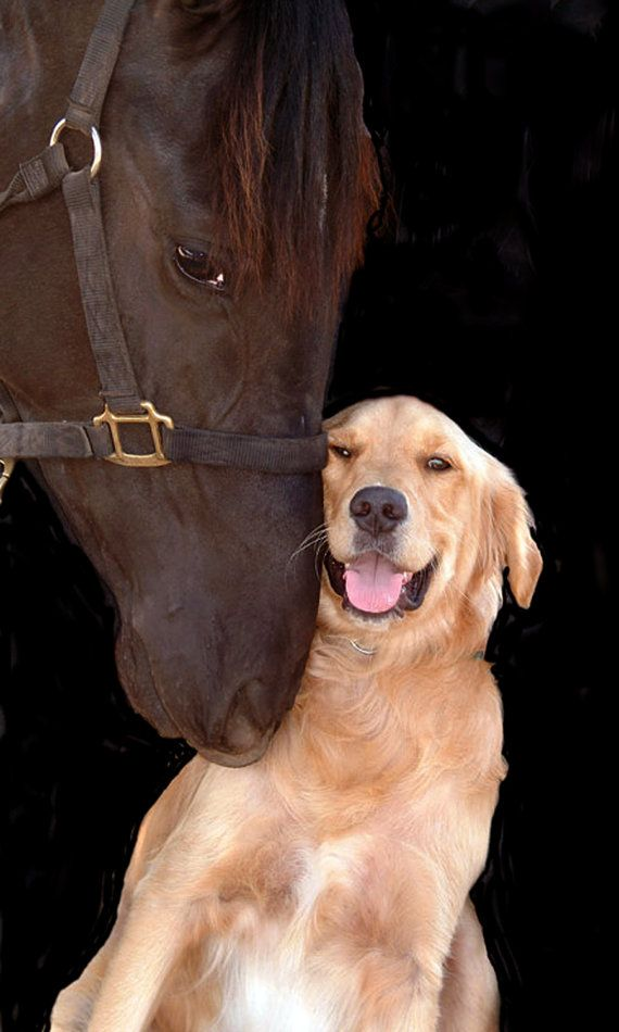 cute dog horse