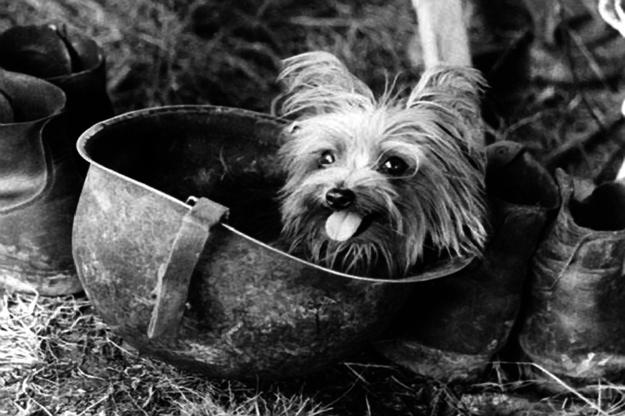 cute dog photo war