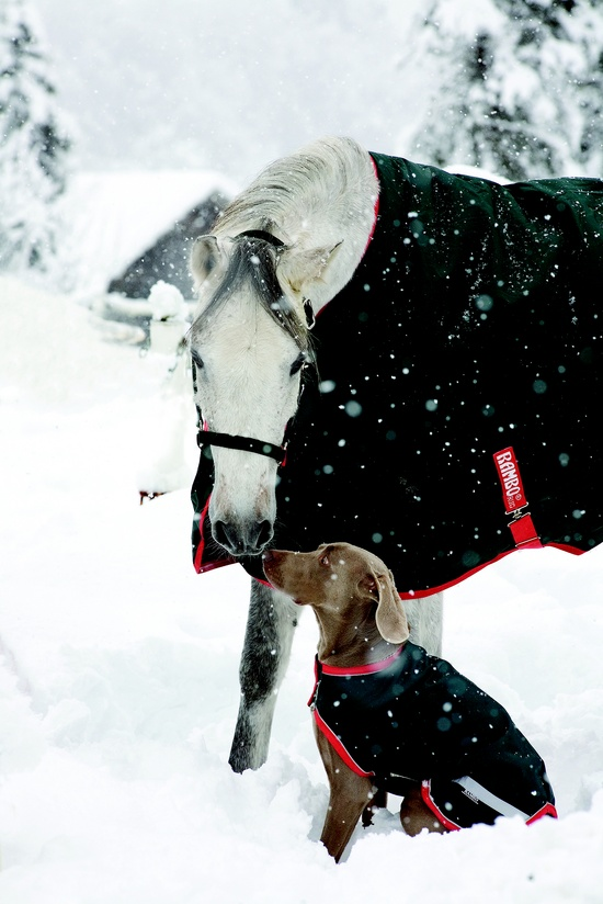 dog and horse winter friendship