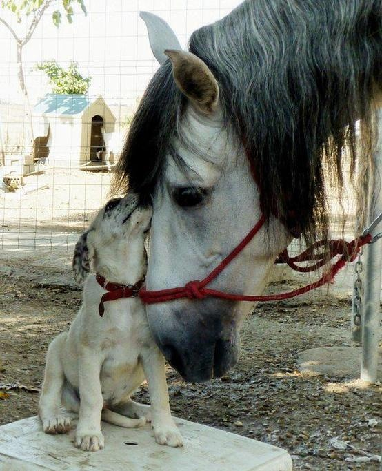 friendship horse dog
