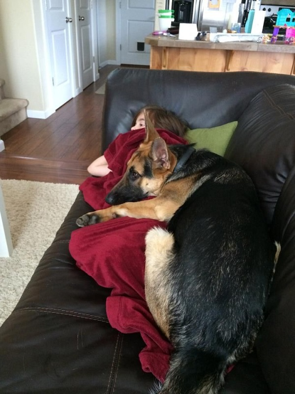 19 Reasons German Shepherds Are Actually The Worst Dogs To