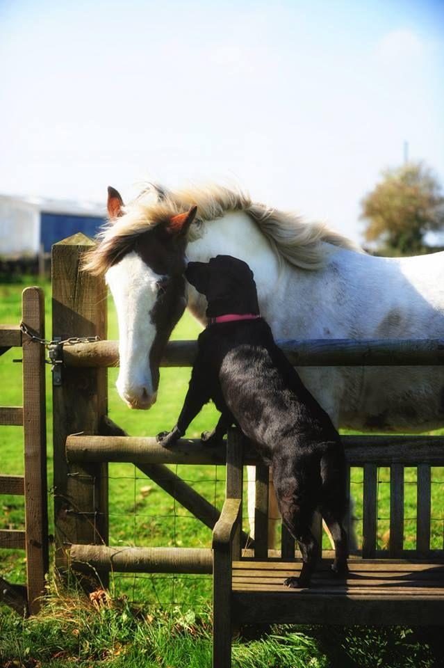 happy dog horse photo