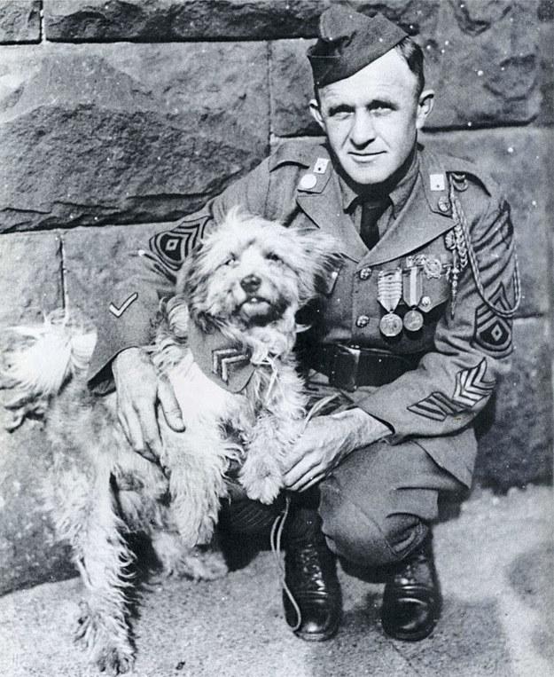 hero dog soldier