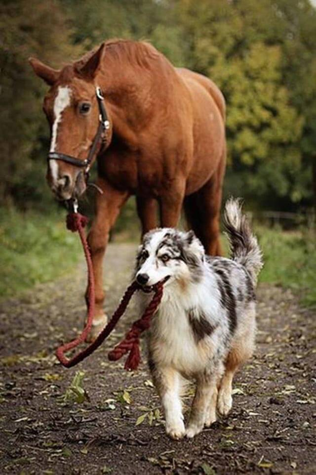 horse dog photo pics