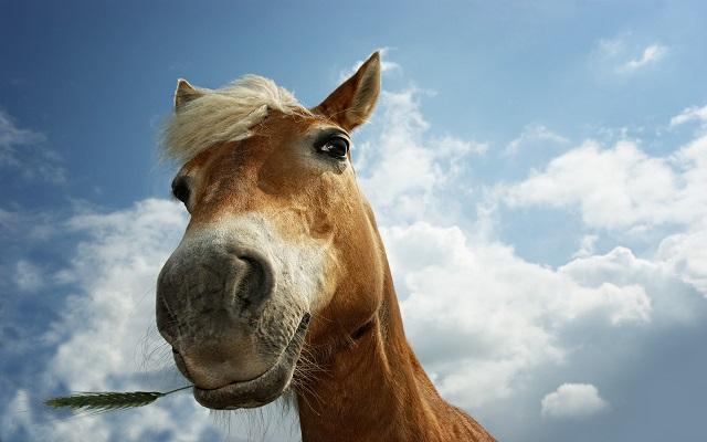 horse eyes face pics