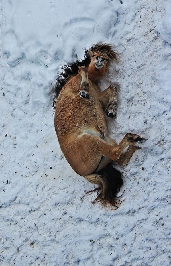 horse love snow pics