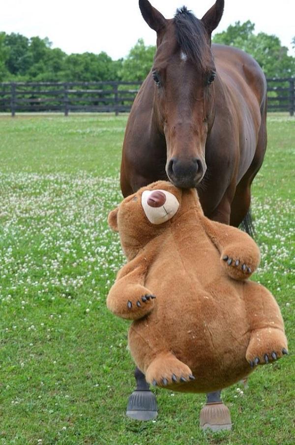 horse teddy bear play