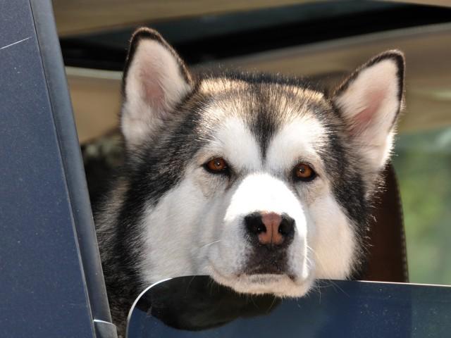 husky window face