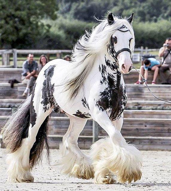 running horse beautiful legs