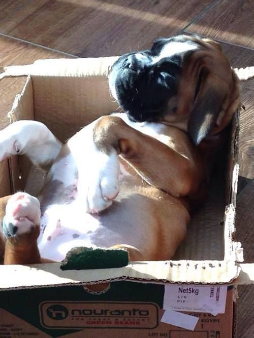 sleeping puppy in a box