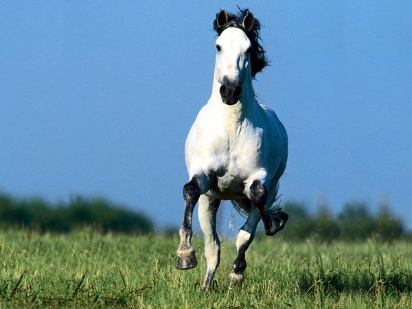 white running horse photo