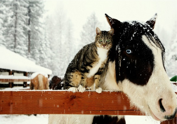winter friends cat and horse