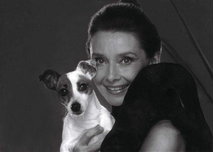 Audrey Hepburn Jack Russell