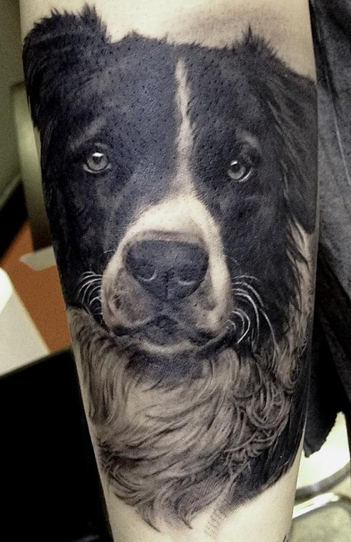 The 12 Coolest Border Collie Tattoo Designs In The World