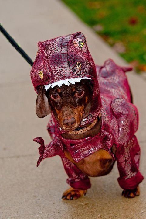 Dog dinosaur