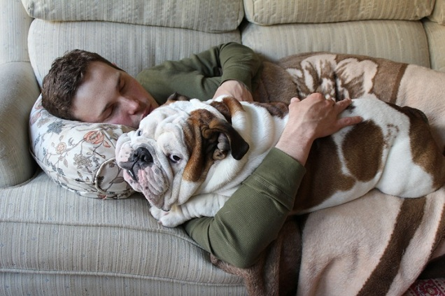 18 Things All English Bulldog Owners Must Never Forget