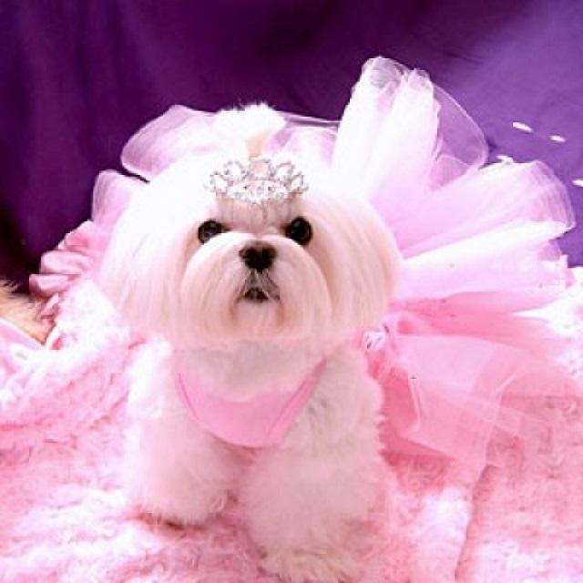 Fairy Princess halloween costume