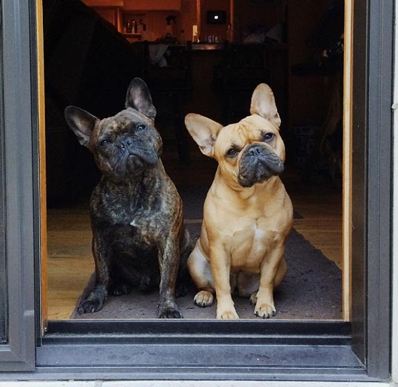 Resultado de imagen para french bulldog door