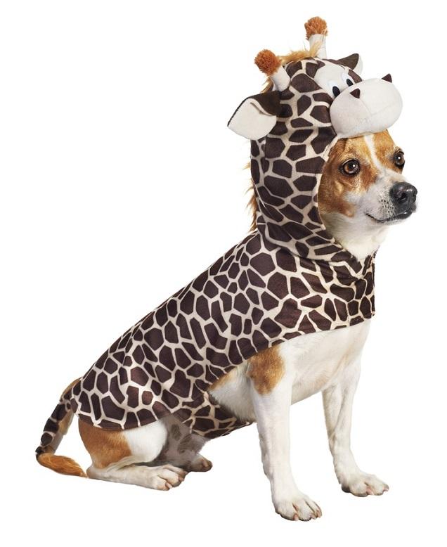 Giraffe dog jack russell halloween