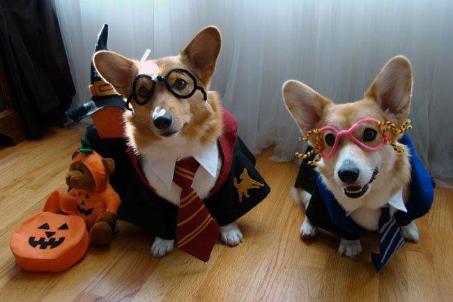 33 costumes that prove corgis always win at halloween