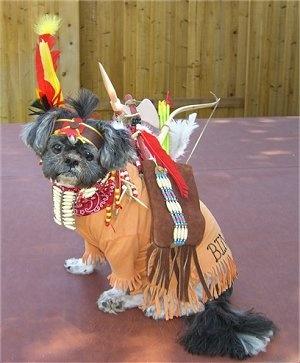 Indian shih tzu costume