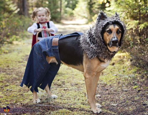 LIttle Bad Wolf Costume