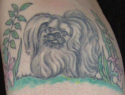 Pekingese Tattoo image