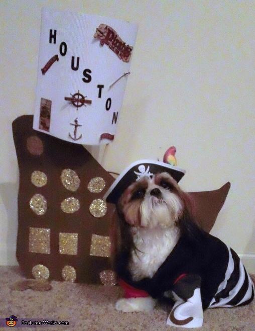 Pirate Costume shih tzu