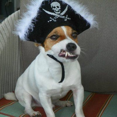 Pirate jack russell costume