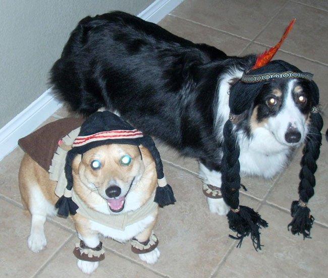 Pocahontases corgis
